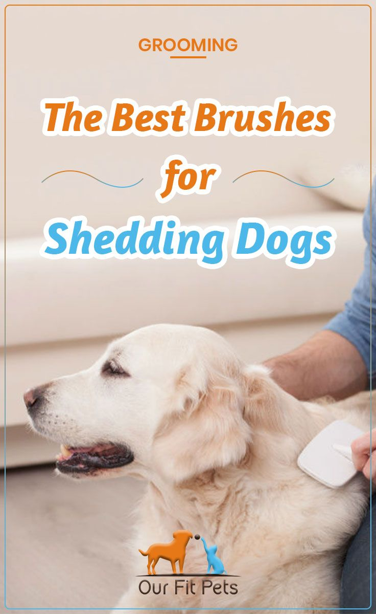 The Best Brushes For Shedding Dogs Dogs Best Brushes Dog Shedding