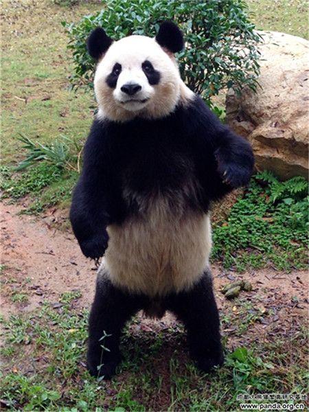 Giant Panda Habitat Panda Habitat Protection Where do