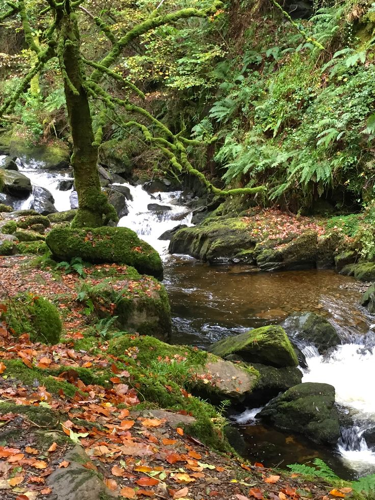 River, Torc Mountains, Ireland