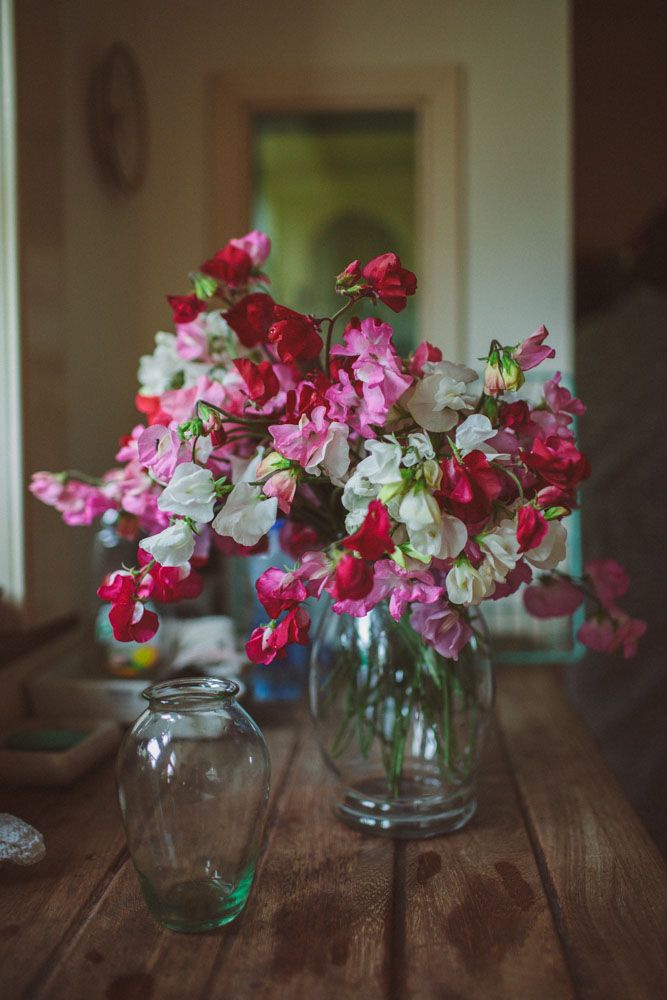 how to grow sweet pea flowers in containers
