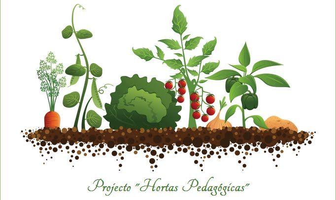 Projecto Hortas Pedagógicas: Sementeiras