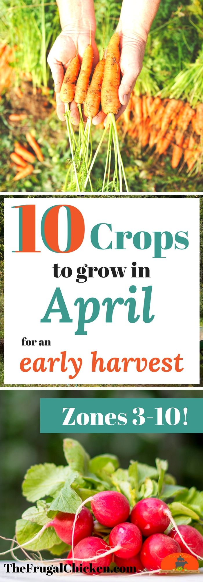 April is the best time to start your garden - and planting now means a healthy harvest this summer! Here's what you can start growing in your vegetable garden in April!