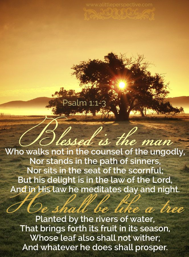 Psalm 1:1-2. Blessed is the man Who walks not in the counsel of the ungodly, Nor stands in the path of sinners, Nor sits in the seat of the scornful; But his delight is in the law of the Lord, And in His law he meditates day and night. He shall be like a tree Planted by the rivers of water, That brings forth its fruit in its season, Whose leaf also shall not wither; And whatever he does shall prosper.