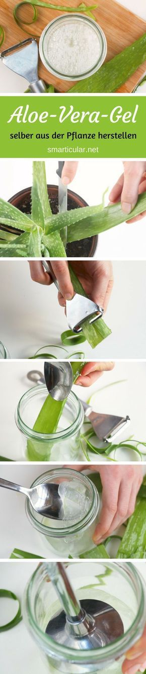 Haltbares Aloe-vera-Gel aus der Pflanze selbst gewinnen