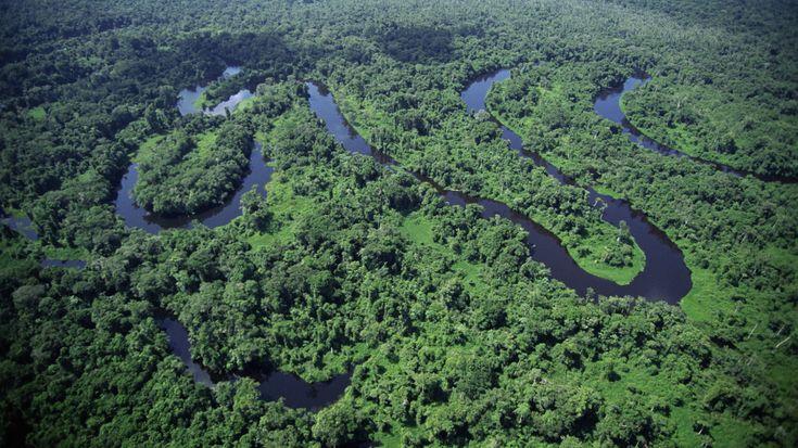 Das Schutzgebiet Zentral-Amazonas gehört zu den artenreichsten Regionen der Erde und ist mit über sechs Millionen Hektar das größte Naturschutzgebiet im Amazonasbecken. Die riesige, von Regenwäldern bedeckte Tiefebene ist von Seen und Wasserläufen durchzogen. Wie eine Wasserschlange windet sich der Rio Negro durch die mosaikartige Landschaft. Tieflandregenwälder sind charakteristisch für die Ebenen an beiden Ufern des Rio Juruá. Das breite Tal ist von zeitweise überfluteten, nährstoffreichen…