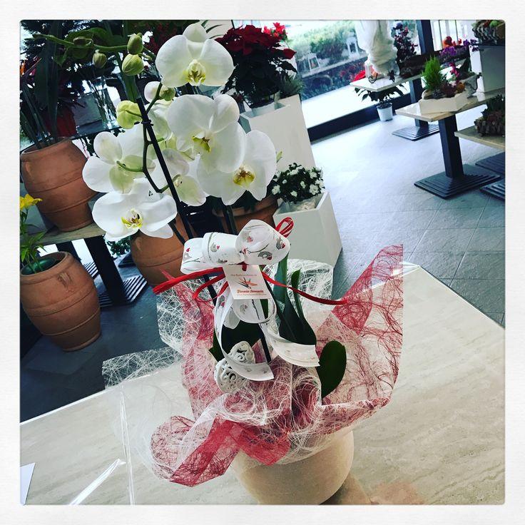 Orchidea Phalenopsis pronta per Natale assieme alla lanterna di cera che fa da portavaso