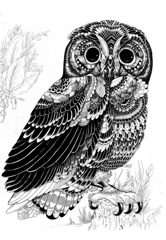 Line Drawn Owl by BIEYE