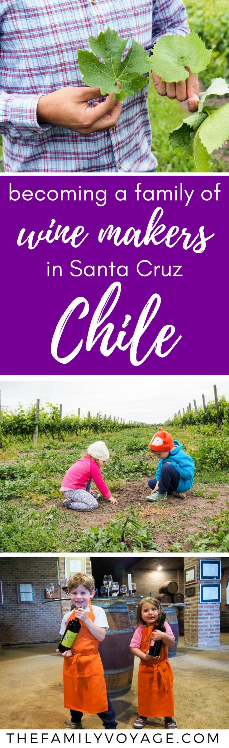 "Are you looking for a unique way to experience wine tasting, whether on your own or with a family? Check out the fun ""winemaker for a day"" at MontGras Vineyard in the Colchagua Valley of Chile! #travel #chile #colchagua #santacruz #wine #winetravel #foodtravel"