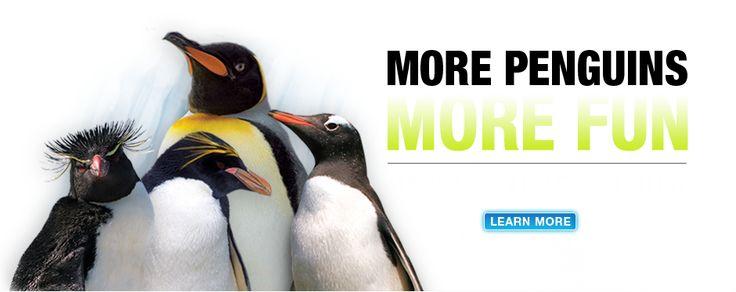 Newport Aquarium   Cincinnati, OH   More Penguins More Fun!   Penguin Palooza   Entertainment/Cultural Attractions   Lexington Campus   Sullivan University
