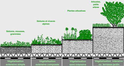 Systèmes de végétalisation extensive pour toitures terrasses et en pente : Ecovegetal   MyGreenHouse   Scoop.it