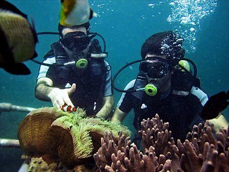 Bali Diving | Scuba Diving Bali | Things To Do in Bali
