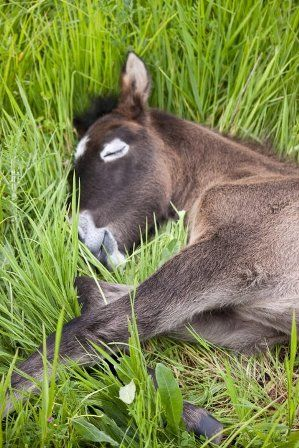 Foals that have this light colored ring around their eyes are going to go gray. Camargue foal