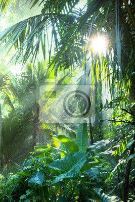 """Väggdekor """"natur, resor, träd - djungel ✓ Ett stort urval av material ✓ Vi anpassar produkten till dina behov ✓ Kolla in våra kunders åsikter!"""