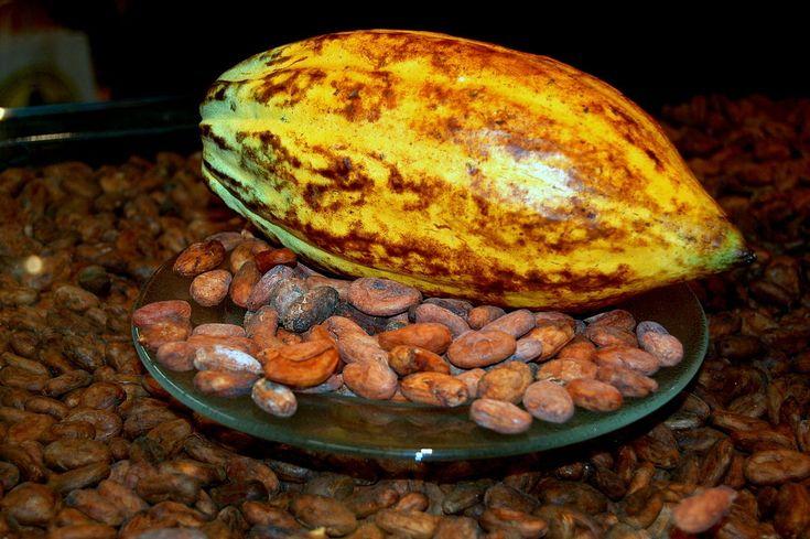 A Theobroma cacao (kakaófa) gyümölcse és a termésének magjai a kakaóbabok / The cocoa beans is Theobroma cacao's (cocoa tree) fruit and the seed of crop  Forrás/source: Wikipedia