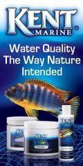 How to build an acrylic aquarium