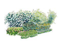 Istutussuunnitelma: savimaan pensaat ja perennat
