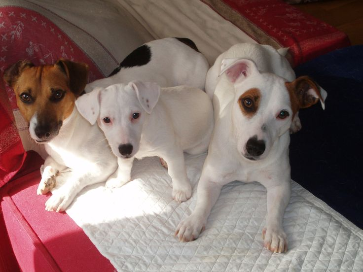 I tre cagnolini della nostra amica Manu hanno già cominciato la dieta di PRIMAVERA! http://www.petsplanet.it/it/cani/dieta-con-pollo-e-riso-per-cani-di-piccola-taglia-la-dieta-gustosa-con-ingredienti-a-basso-contenuto-di-colesterolo-da-fare--165.html