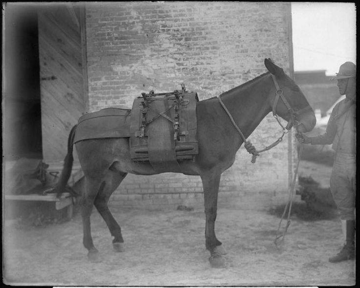army pack mule | pack mules | Pinterest | Gov't mule and Army