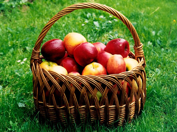 Jak zpracovat přebytek jablek | recepty