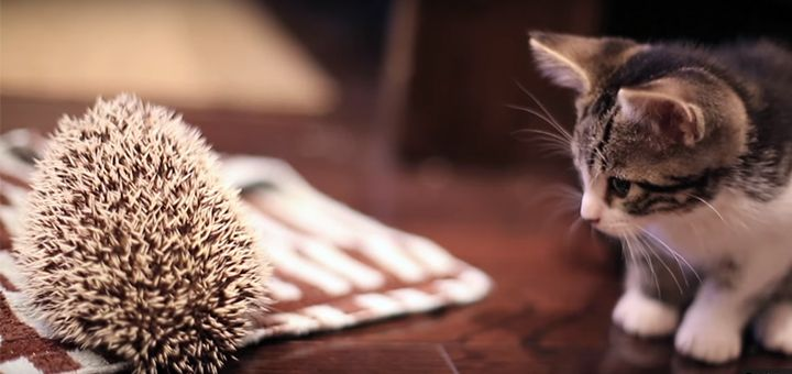 Утро понедельника может стать колючим как ежик, или нежным как котенок. Видео - http://pixel.in.ua/archives/10894