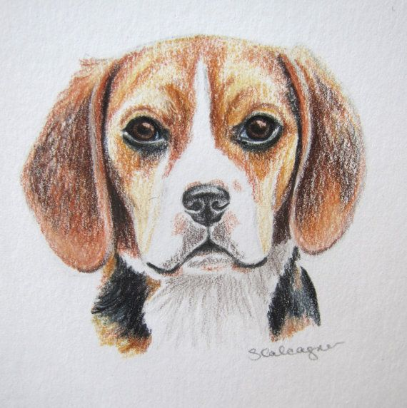 Original Dog Art Beagle Drawing Colored Pencil By