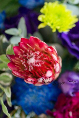 Protea Repense in Red