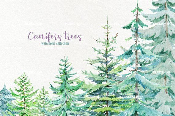 Watercolor Conifers Trees Clipart Pine Trees Clipart Christmas