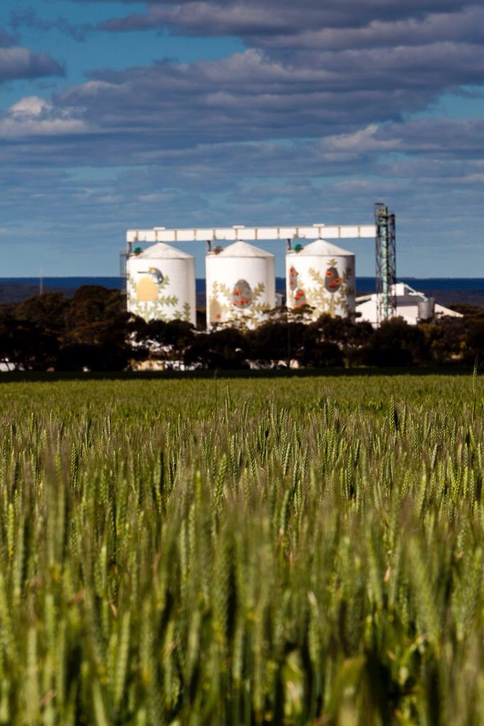 Six Stages of Banksia baxteri- a mural painted across three 25-metre grain silos in Western Australia by Amok Island as part of FORM's PUBLIC Art in Ravensthorpe.