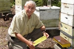 Using Spearmint And Lemongrass To Protect Bees From Mites That Threaten Hives