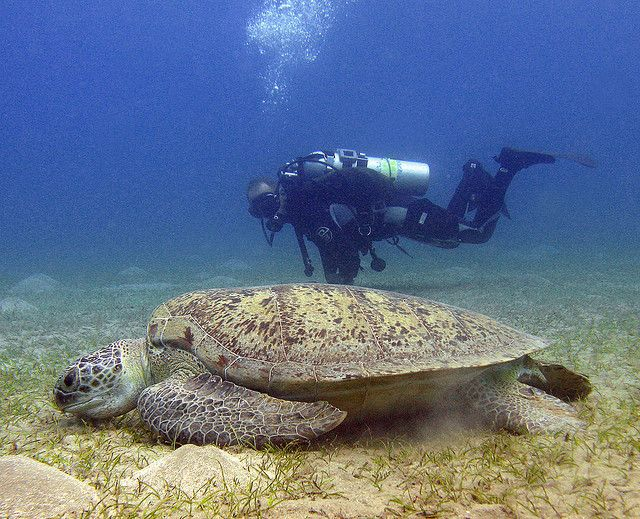 I'd like to be the dude in the gear! That is awesome, to say the least. turtle eggs