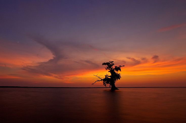 PanaromicLonely Trees, God Creations, Copyright Evgeni, Favorite Places, Usa Copyright, Evgeni Vasenev, Africa, Awesome Nature, Landscapes Photography