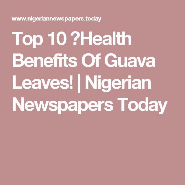 Top 10 ✔Health Benefits Of Guava Leaves! | Nigerian Newspapers Today