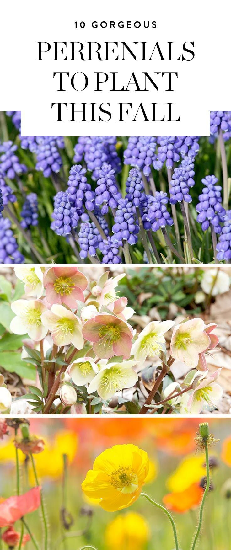 The big list of self watering planters for stylish gardening anywhere - 10 Gorgeous Perennials To Plant This Fall