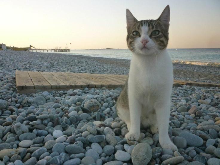 On the shores of Alanya, Turkey
