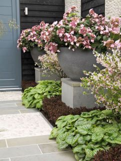 The hydrangea 'Endless Summer' is featured in large, elevated containers to emphasize its lovely flowers.