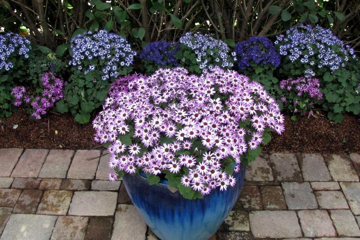 10 plants to add instant curb appeal when you u0026 39 re selling your home