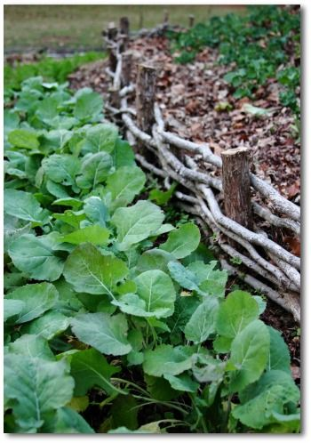 Home And Garden Design Software