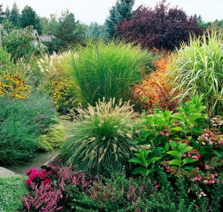17 best images about midwest gardening on pinterest for Ornamental grass bed