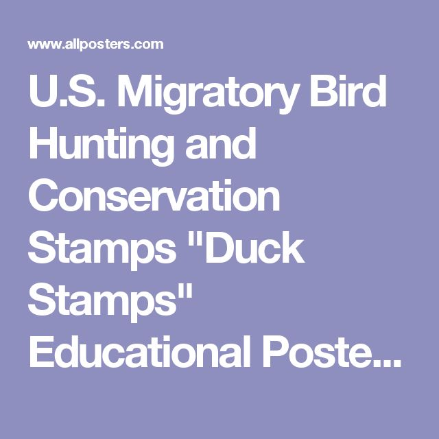 "U.S. Migratory Bird Hunting and Conservation Stamps ""Duck Stamps"" Educational Poster Posters at AllPosters.com"