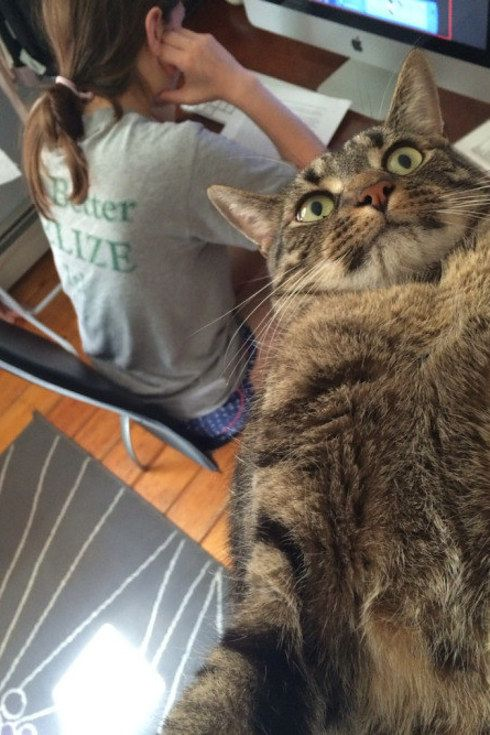 23 Things Cats Don't Give A Shit About