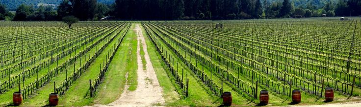 """Vineyards in central Chile. """"Andes & wines"""" day tour with Ecochile travel"""