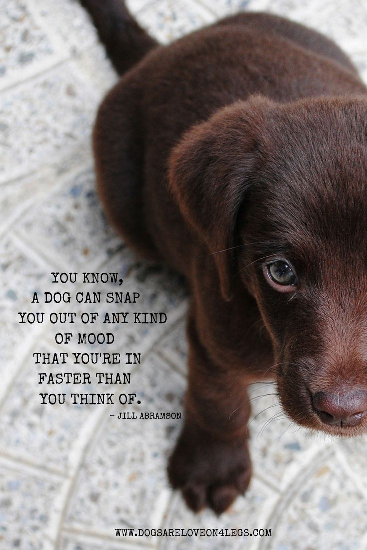 Dog Quote You Know A Dog Can Snap You Out Of Any Kind Of Mood