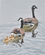 Goose Family done in color pencil on toned bristol plate paper - by Artist Daily member Kay Morgan