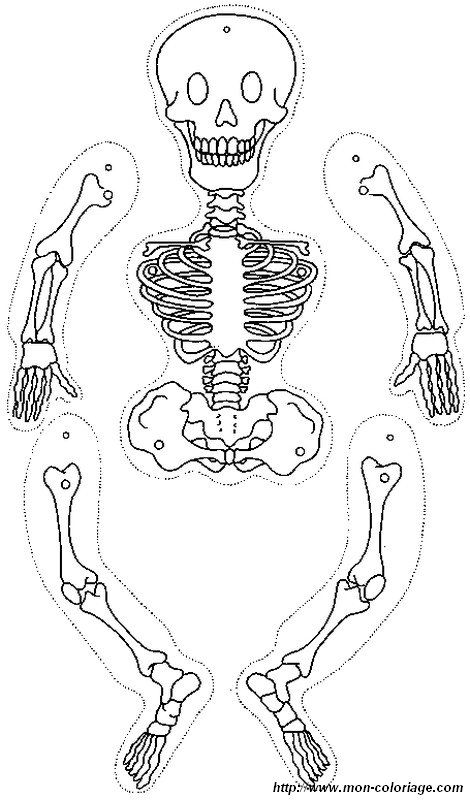 Ausmalbild skelett ausschneiden Skelett für kinder