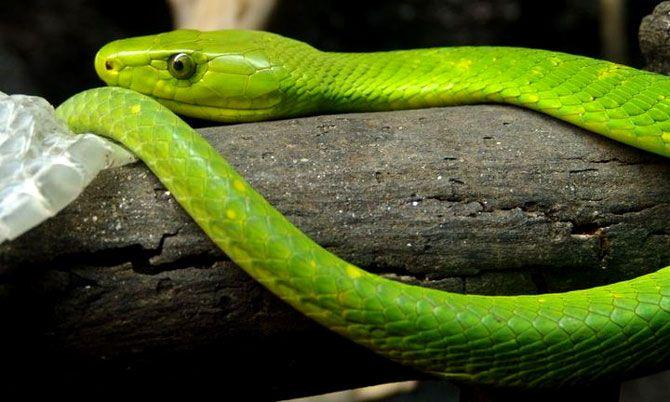 snake at phezulu safari park