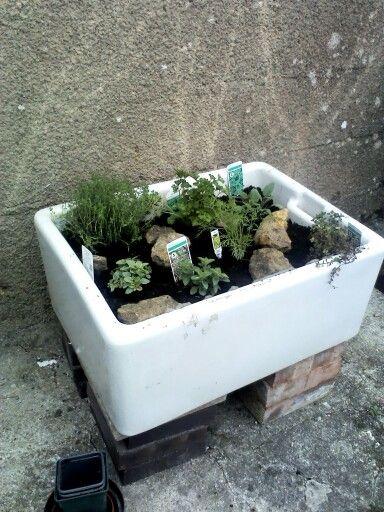 Belfast sink herb garden