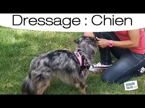 Comment apprendre à son chien à boiter ? - YouTube
