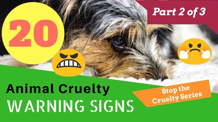 Part 2 of 3 20 animal cruelty warning signs dog abuse