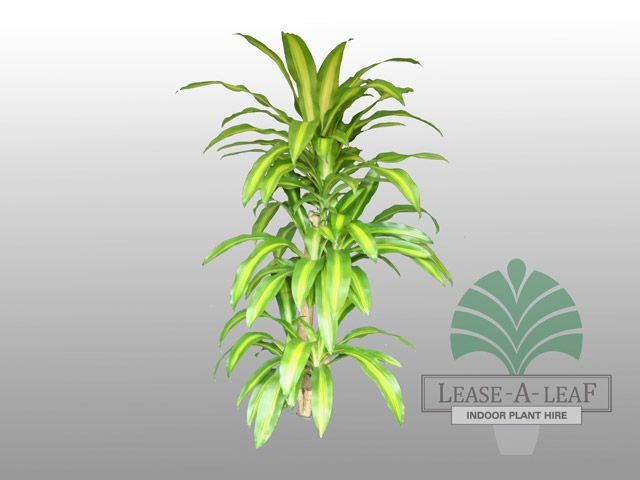 Lease-A-Leaf Indoor Plants