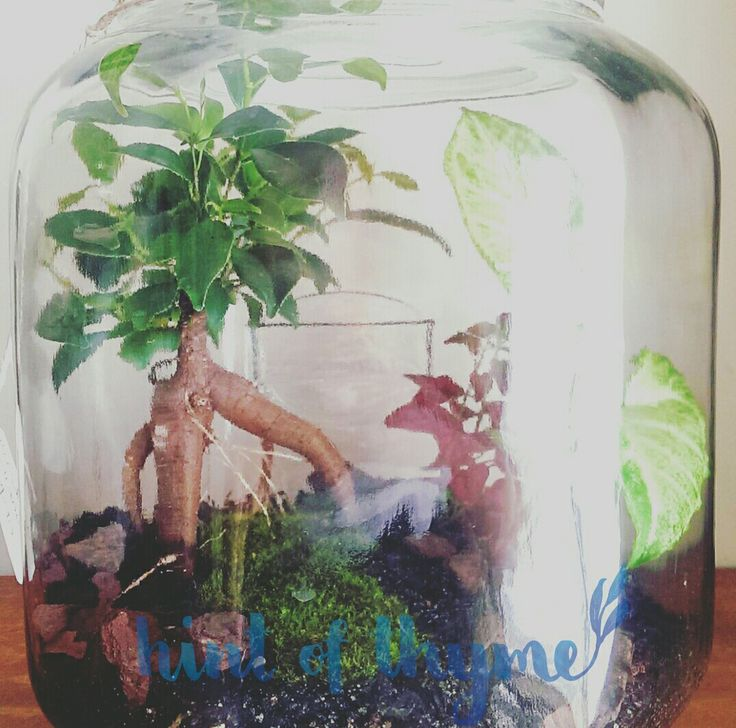 Bonsai terrarium by Hint of Thyme